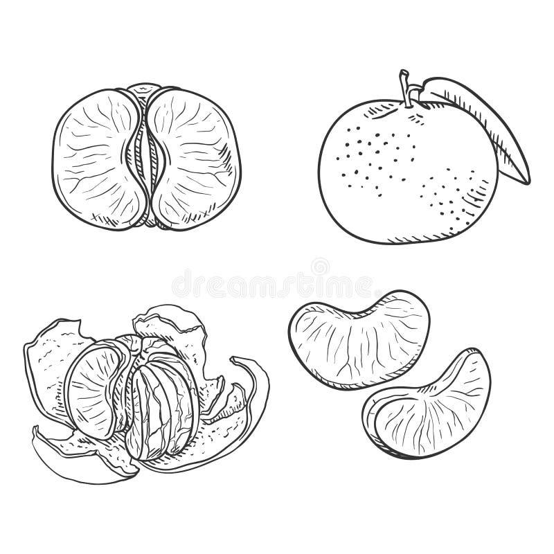 Insieme di vettore dei mandarini di schizzo royalty illustrazione gratis