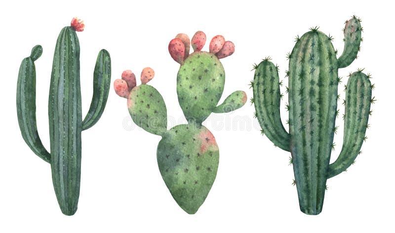 Insieme di vettore dell'acquerello dei cactus e della crassulacee isolati su fondo bianco royalty illustrazione gratis