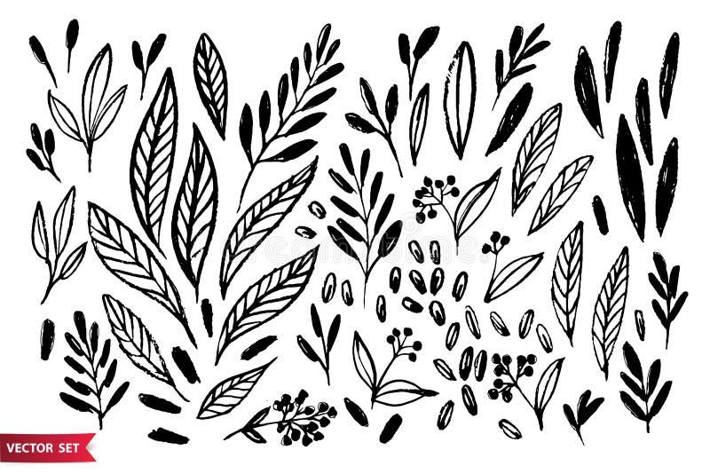 Insieme di vettore della mano che disegna le piante selvatiche, le erbe e le bacche, illustrazione botanica artistica monocromati illustrazione vettoriale