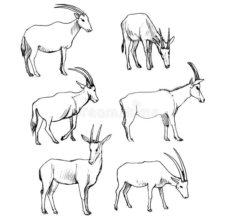 Insieme di vettore delle antilopi illustrazione vettoriale