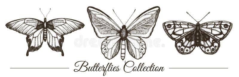 Insieme di vettore delle farfalle in bianco e nero disegnate a mano illustrazione vettoriale