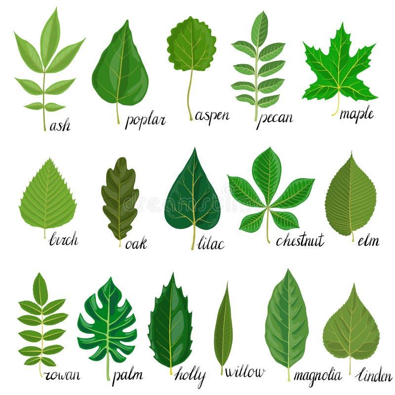 Insieme di vettore delle foglie dell'albero illustrazione vettoriale