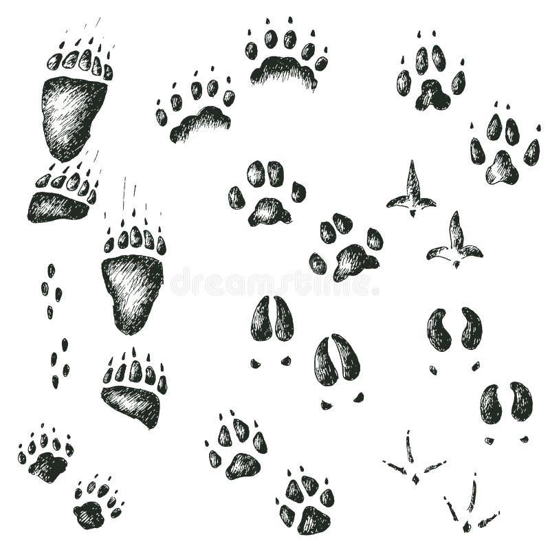 Insieme di vettore delle piste di legno selvagge di camminata dell'uccello e dell'animale illustrazione di stock