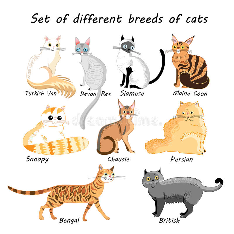 Insieme di vettore delle razze del gatto illustrazione vettoriale