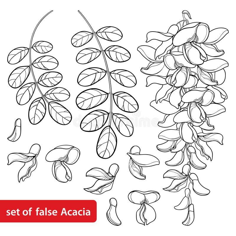 Insieme di vettore mazzo del fiore dell'acacia falsa bianca del profilo o della locusta nera o di Robinia, germoglio e foglie nel illustrazione vettoriale