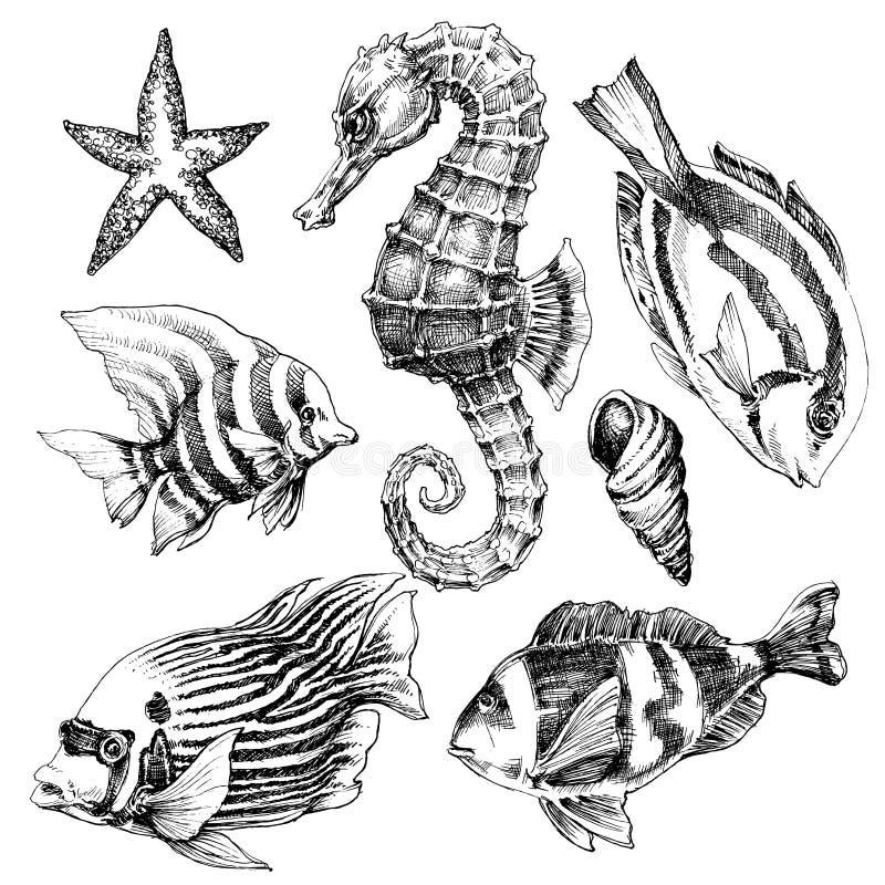 Insieme di vita di mare illustrazione di stock