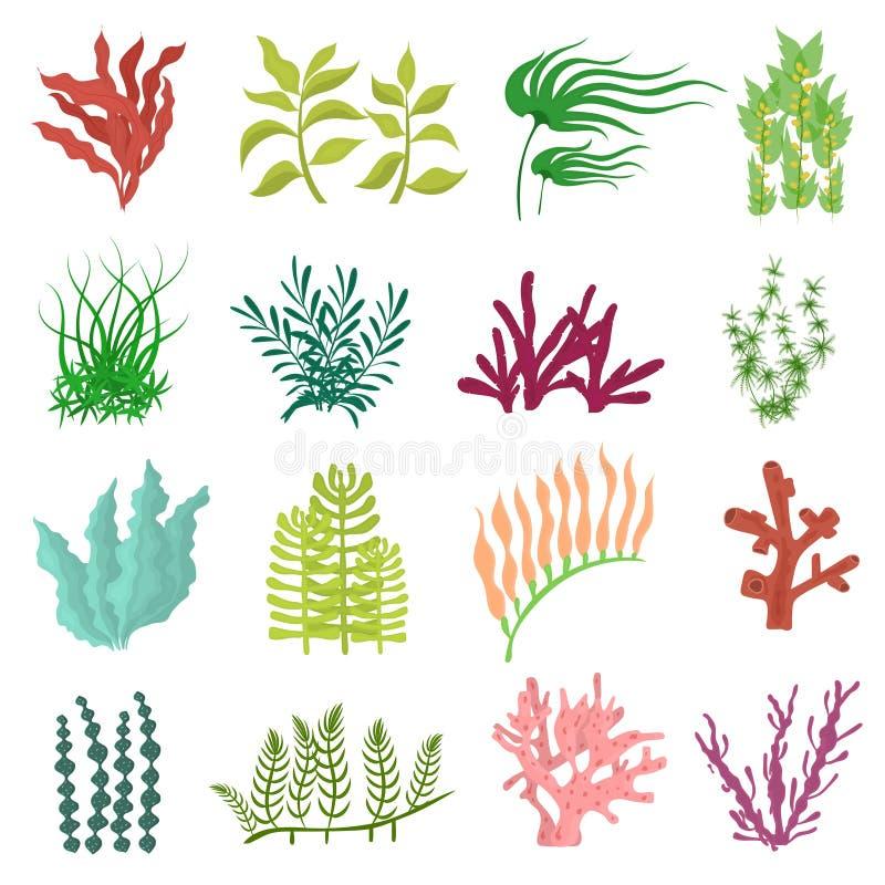 Insieme differente dell'icona dell'alga di colore del fumetto Vettore illustrazione di stock