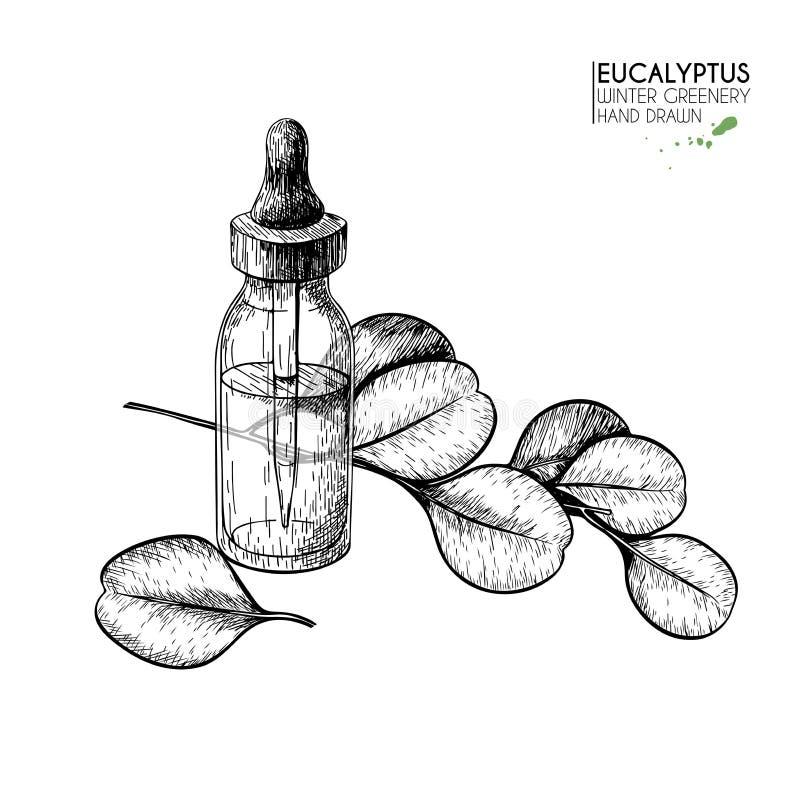Insieme disegnato a mano degli oli essenziali Ramo dell'eucalyptus di vettore Erba medicinale con la bottiglia di vetro del conta illustrazione vettoriale