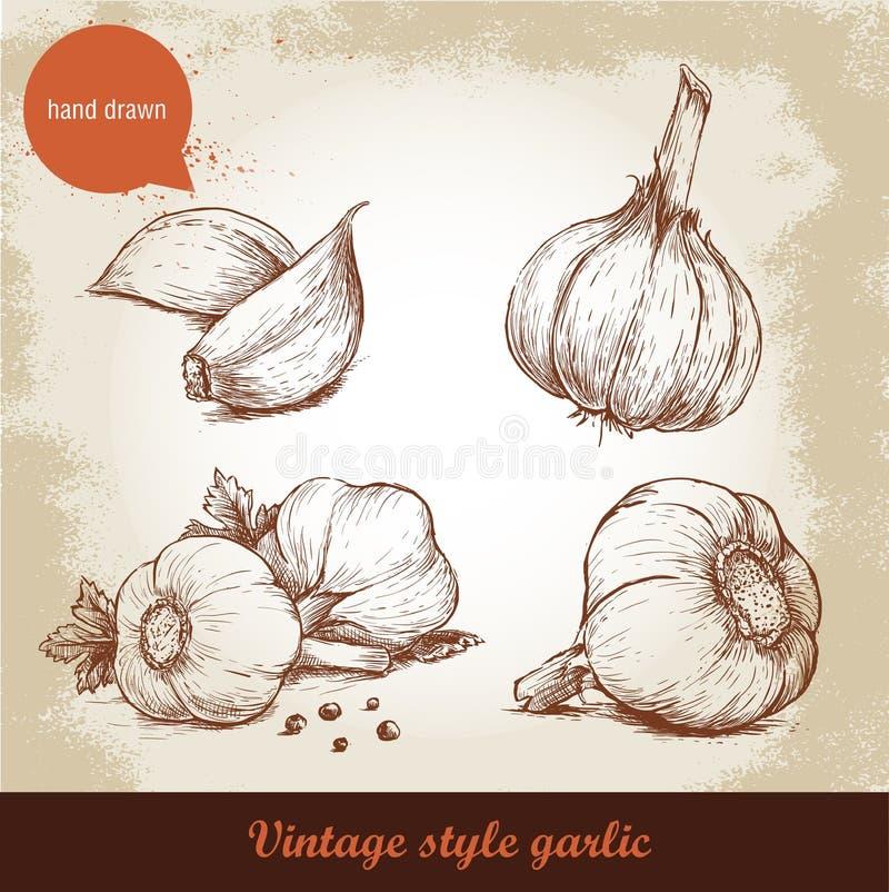 Insieme disegnato a mano dell'aglio di vettore illustrazione di stock