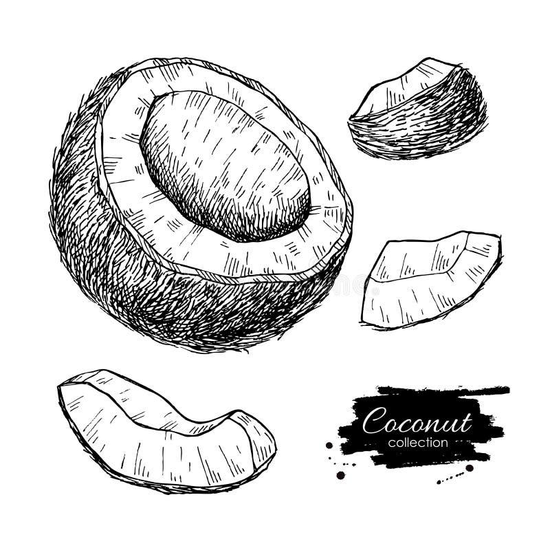 Insieme disegnato a mano della noce di cocco di vettore Frutta tropicale di estate royalty illustrazione gratis