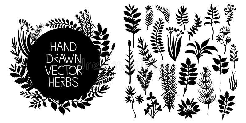 Insieme disegnato a mano delle erbe e delle piante Elementi di disegno di vettore royalty illustrazione gratis