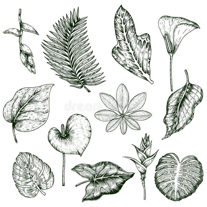 Insieme disegnato a mano di monocromio delle piante tropicali royalty illustrazione gratis