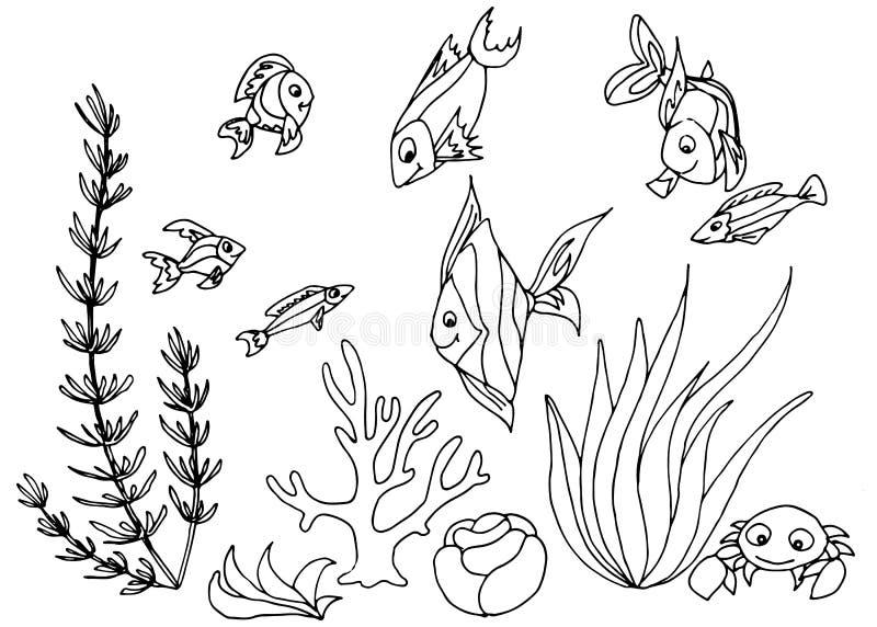 Insieme disegnato a mano di progettazione del pesce tropicale illustrazione vettoriale