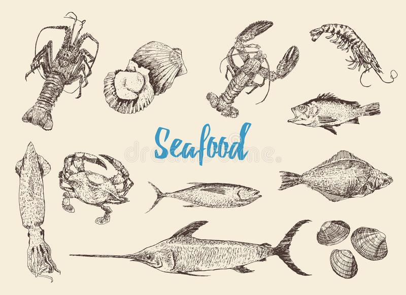 Insieme disegnato a mano di schizzo di frutti di mare royalty illustrazione gratis