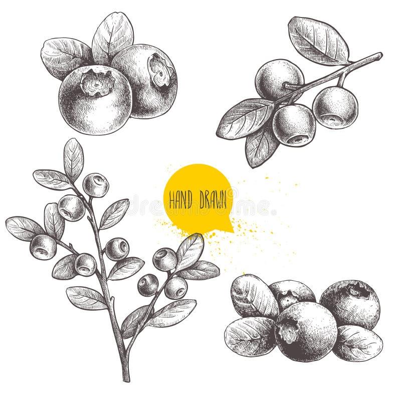Insieme disegnato a mano di stile di schizzo dei mirtilli Su fondo bianco Bacca della foresta royalty illustrazione gratis