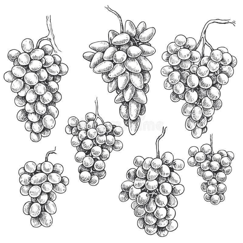 Insieme disegnato a mano di varietà del mazzo dell'uva illustrazione di stock