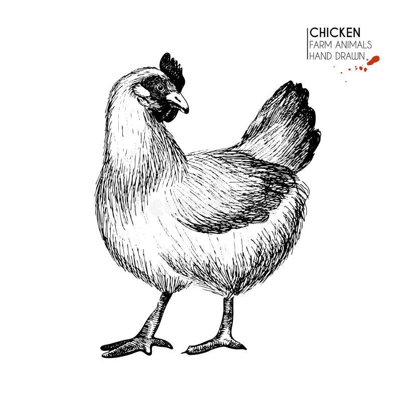 Insieme disegnato a mano di vettore degli animali da allevamento Gallina isolata del pollo Arte incisa Uccelli d'agricoltura schi illustrazione vettoriale