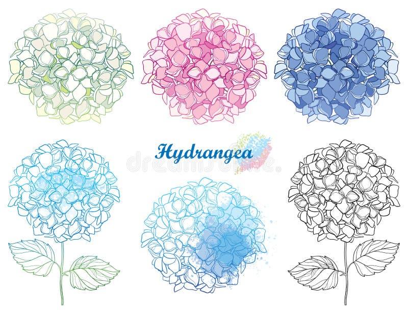 Insieme disegnato a mano di vettore mazzo del fiore dell'ortensia o di Hortensia del profilo in rosa pastello e blu isolato su fo illustrazione di stock