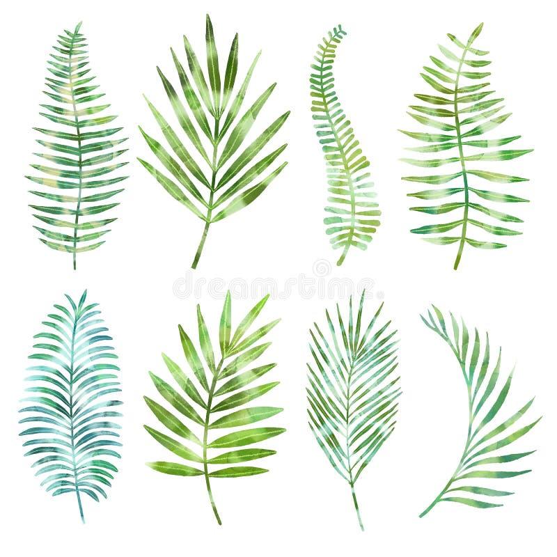 Insieme esotico dell'acquerello, raccolta tropicale delle foglie di palma isolata su fondo bianco Elementi floreali della palma v illustrazione di stock