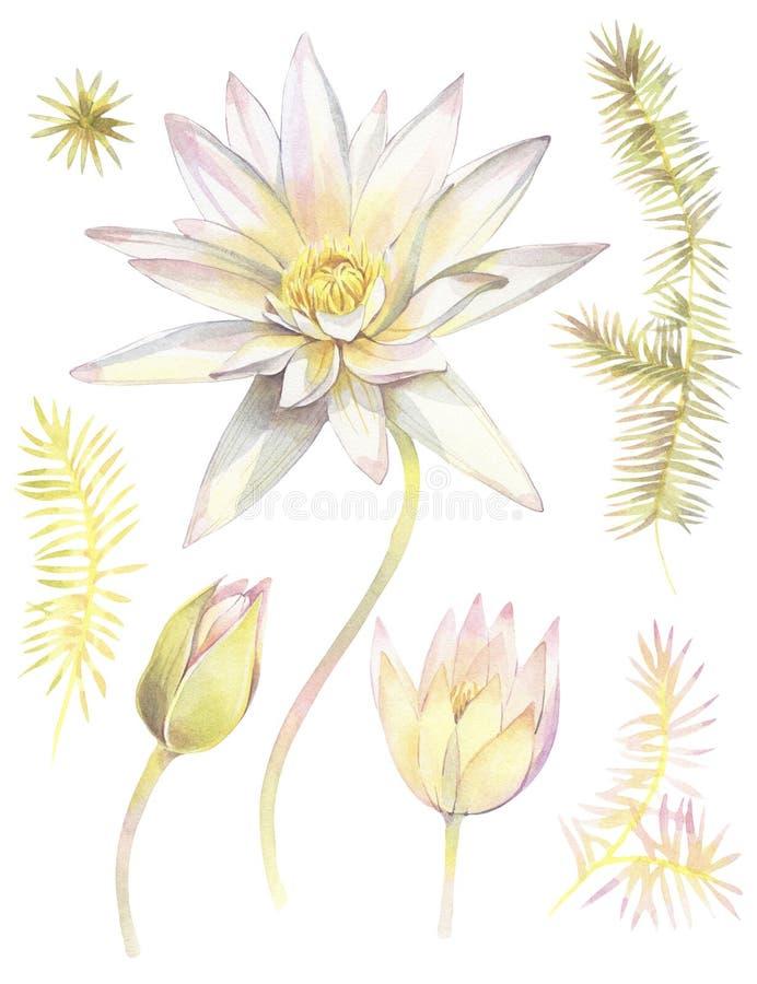 Insieme floreale con i fiori di lotos Illustrazione dipinta a mano dell'acquerello illustrazione vettoriale