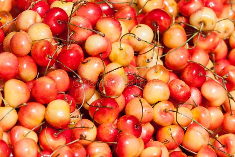 Insieme fresco delle ciliege rosse e gialle fotografia stock