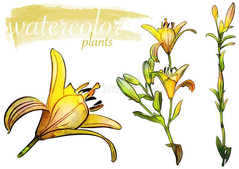 Insieme giallo del fiore dell'acquerello royalty illustrazione gratis