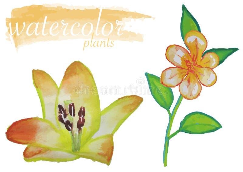 Insieme giallo del fiore dell'acquerello illustrazione di stock