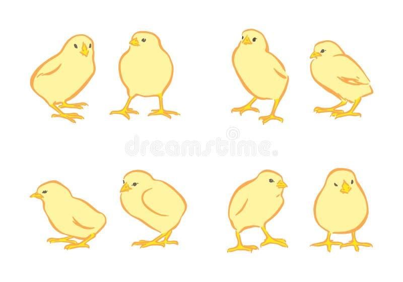 Insieme giallo di vettore dei polli Caratteri felici disegnati a mano del pulcino di giorno di Pasqua animale isolato su fondo bi illustrazione vettoriale