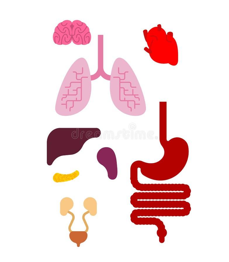 Insieme interno degli organi umani di anatomia Cuore e cervello Fegato e st illustrazione vettoriale