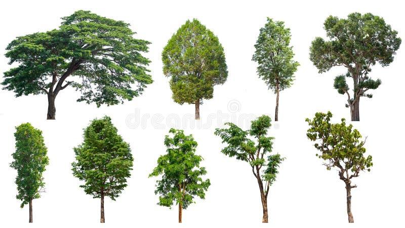 Insieme isolato su fondo bianco, la raccolta dell'albero degli alberi Il grande albero ha isolato immagine stock libera da diritti