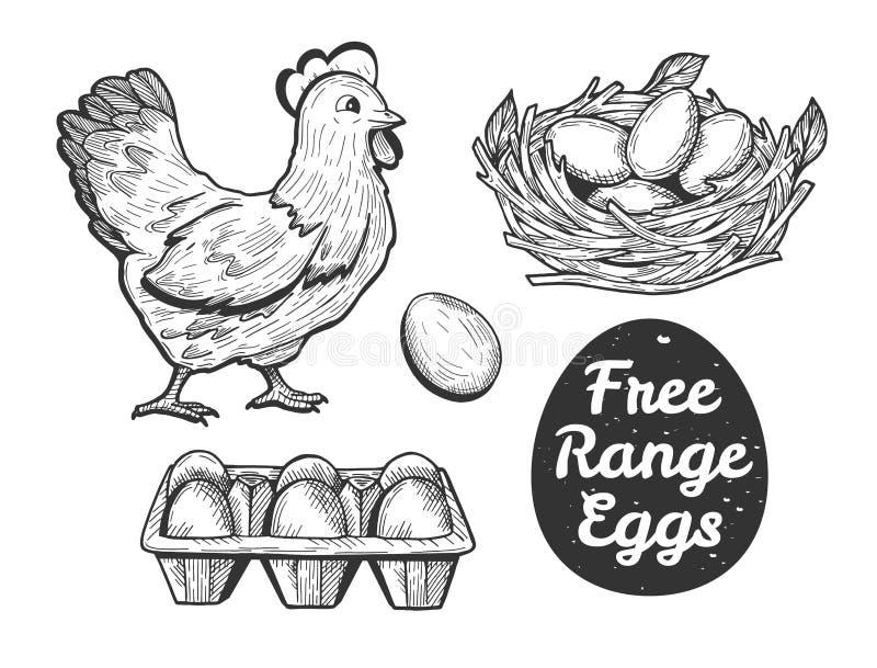 Insieme libero delle uova della gamma royalty illustrazione gratis