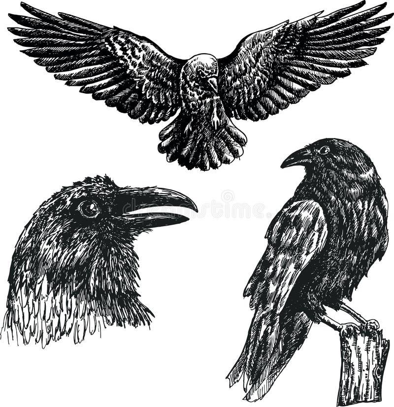 Insieme nero dell'icona di schizzo di vettore dell'uccello del corvo illustrazione di stock