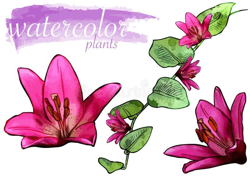 Insieme porpora del fiore dell'acquerello royalty illustrazione gratis