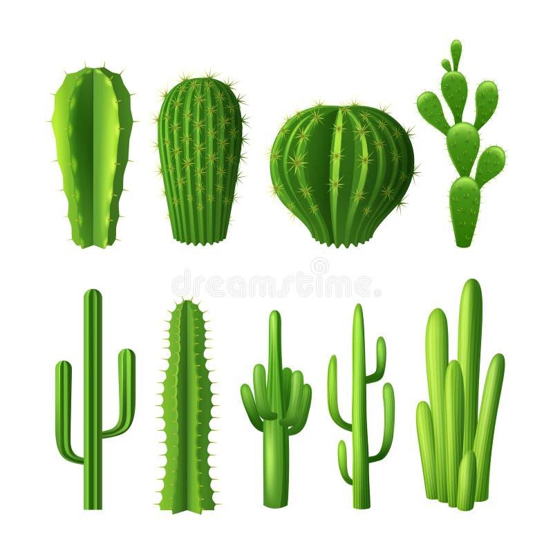 Insieme realistico del cactus illustrazione di stock