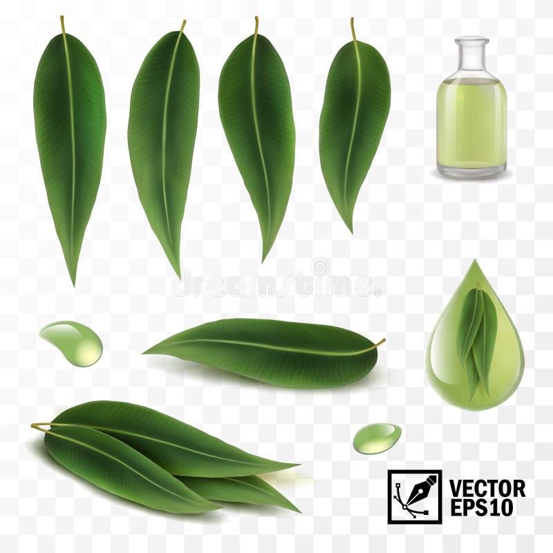 insieme realistico di vettore 3D degli elementi, foglie dell'eucalyptus e gocce o olio di rugiada illustrazione di stock