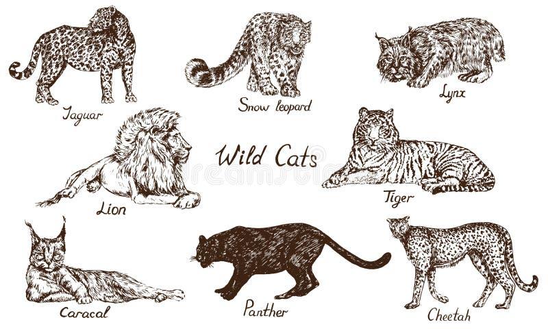 Insieme selvaggio dei gatti: Jaguar, oncia dello Snow Leopard, gatto selvatico di Lynx, leone, tigre, rooikat di Caracal, lince p illustrazione di stock