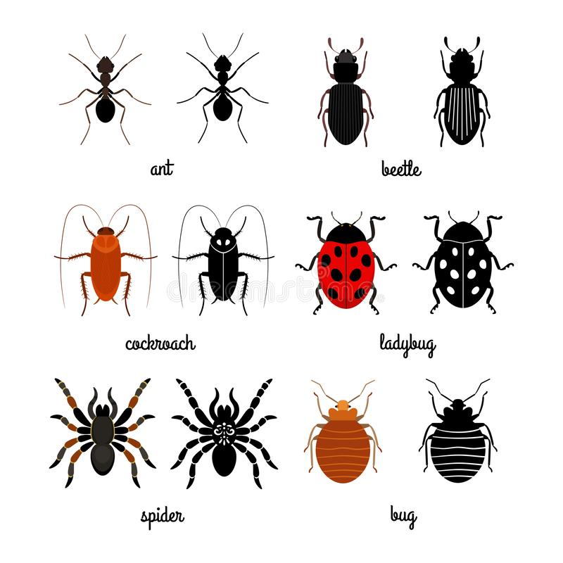 Insieme strisciante di vettore di insetti - formica, ragno, scarabeo, coccinella royalty illustrazione gratis