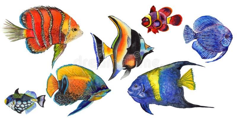 Insieme tropicale variopinto subacqueo acquatico del pesce dell'acquerello Mar Rosso e pesci esotici dentro illustrazione vettoriale
