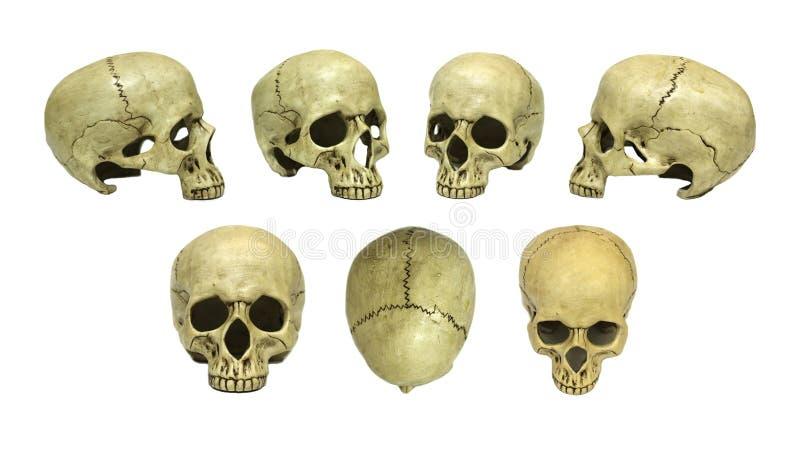 Insieme umano del cranio fotografie stock libere da diritti