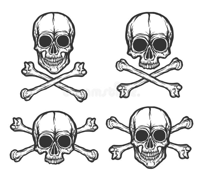 Insieme umano di vettore dei crani royalty illustrazione gratis