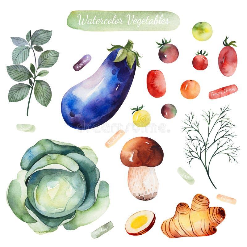 Insieme variopinto con basilico, melanzana, pomodori, cavolo, fungo, aneto, zenzero illustrazione di stock