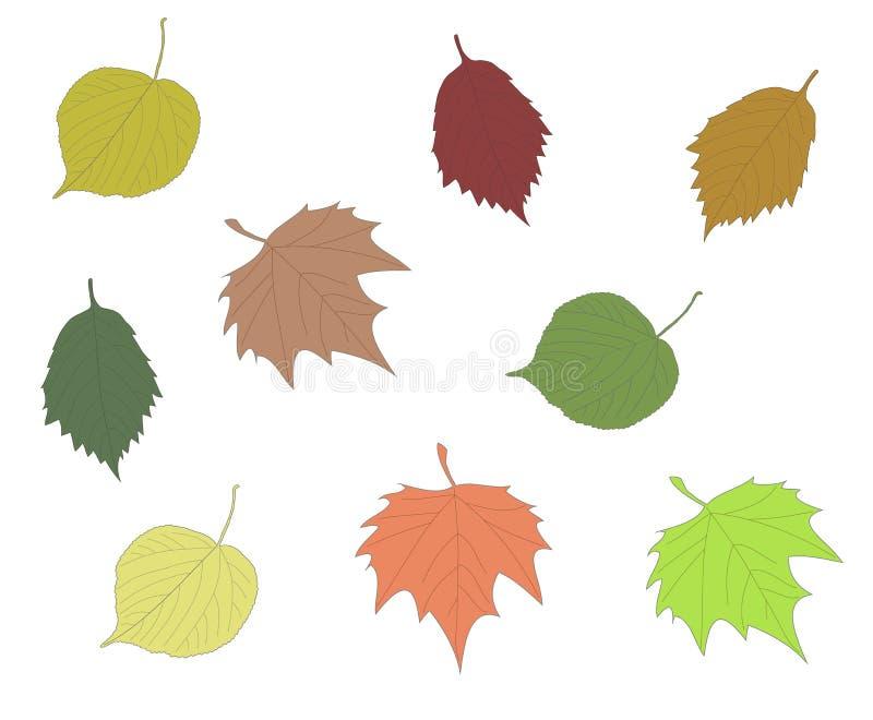 Insieme variopinto della foglia dell'ontano dell'acero del tiglio della raccolta delle foglie di autunno royalty illustrazione gratis