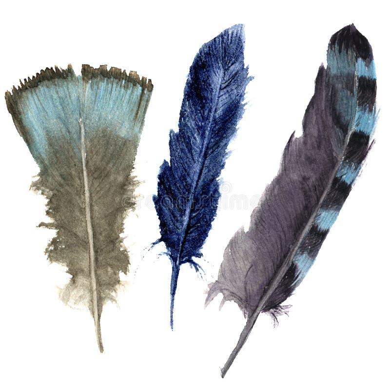 Insieme vibrante della piuma dell'acquerello disegnato a mano Stile della piuma di Boho piuma dell'illustrazione Isolato su bianc illustrazione di stock