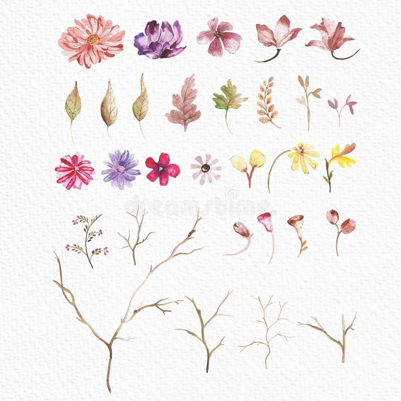 Insiemi di elementi floreali dell'acquerello fotografia stock