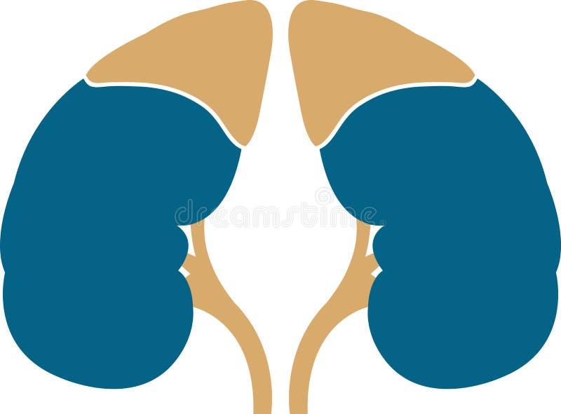 Insignia del riñón stock de ilustración