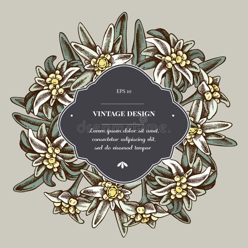 Insignia sobre diseño con las edelweiss stock de ilustración