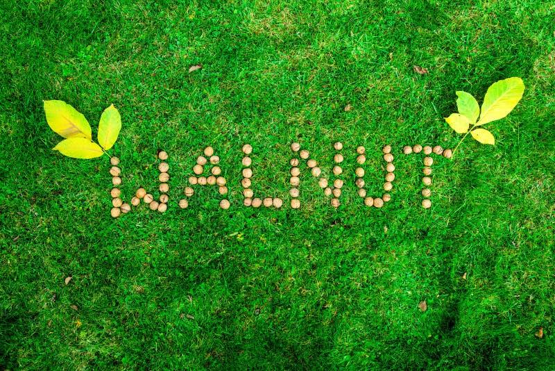 Inskrift av valnötter på gräset arkivfoton
