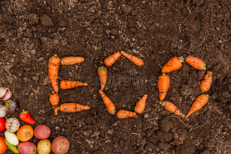 Inskrift ECO på bakgrunden av ny jord och en grupp av unga grönsaker royaltyfria bilder