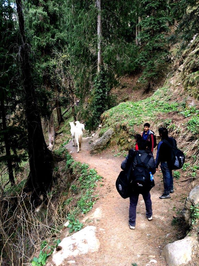 Insnöade Tosh, Himachal Pradesh arkivfoto