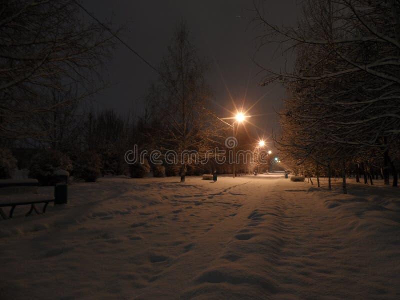 Insnöat parkerar natten royaltyfria foton